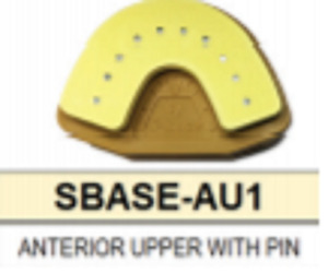 S Base Denture Model Upper Anterior With Pins