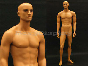 Tan Skin Young Male Mannequin Dress From Display md ham25