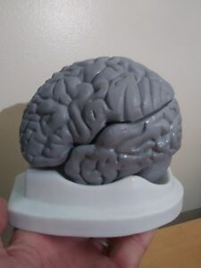 Heavy Odd Vintage Medical Brain Model W Base Anatomy 3 Part