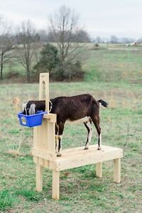 New Small Goat Milking Stand For Pygmy And Nigerian Dwarf Goats 32in Composite