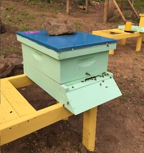 July Pre sale 360 Complete Bee Hive With Live Bees Queen Deposit 50