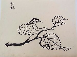 Original Calligraphic Pen And Ink Drawing China Qing Antique Silkworms C1900