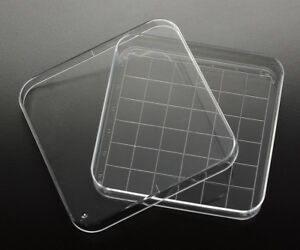 15 X 90mm Square Petri Plate dish With Numbered 13x13mm Grid New Sterile