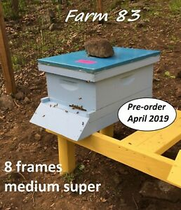 Pre order April Complete 8 Frames Bee Hive With Live Bees Queen Medium Super
