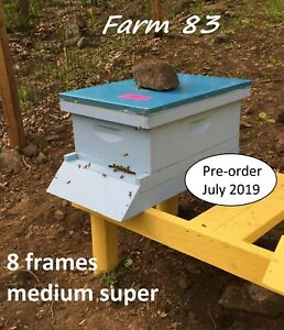 Pre order July Complete 8 Frames Bee Hive With Live Bees Queen In Medium Super
