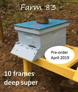 Pre order April Complete 10 Deep Frames Bee Hive With Live Honey Bees