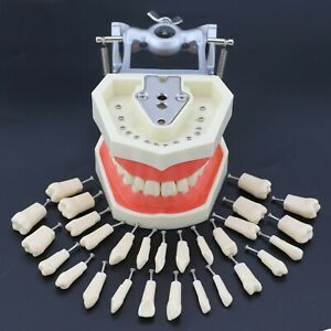 Kilgore Nissin 200 Type Dental Practice Typodont Teeth Model 28pcs Replace Tooth