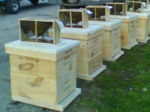 Combo Hive Package Of Live Bees And Queen 380 Pre order April Deposit 50