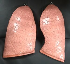 3b Scientific Xb007 Spare Lungs 2 Items Anatomical Model Anatomy
