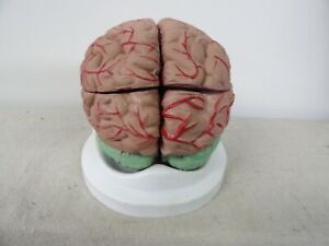 Vintage 8 Piece Human Brain Anatomical Medical Model Anatomy Medical Training