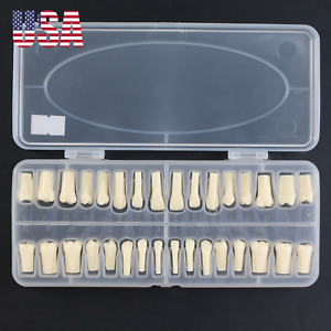 Dental Replacement Typodont Teeth 32 Pcs With Screw Kilgore Nissin 200 Fit