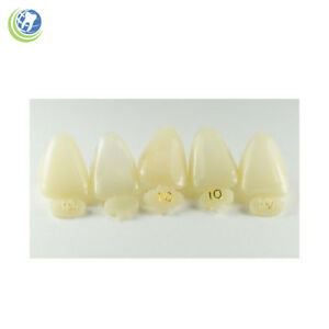Dental Polycarbonate Temporary Crowns 10 urc Upper Right Central 5 pack