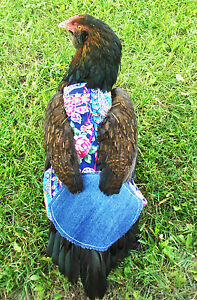 4 Super Wide W Tail Feather Protection Chicken Saddle Hen Apron Poultry Products