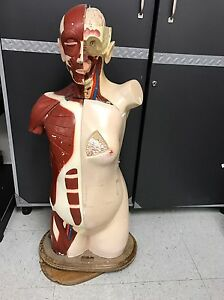 Vintage Denoyer Geppert Human Anatomical Model Torso Manikin W Removable Parts