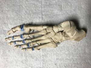 Vintage Medical Plastics Laboratory Foot Skeleton Model