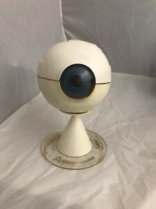 Vintage Aldomet Eye Anatomical Model Eyeball Anatomy Optic