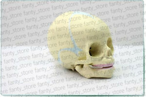 1pcs 9x8x7cm Anatomy Baby Infant Fetus Skull Skeleton Medical Model a391 Lw