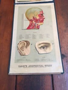 Antique 1885 Yaggys Anatomical Study Of Human Anatomy Doctors Wall Chart As Is