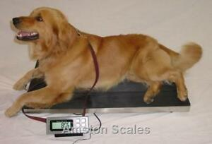 Super Heavy Duty Steel Vet Scale 700 X 0 5 Lb 38x20 Inch Digital Dog Calf Large