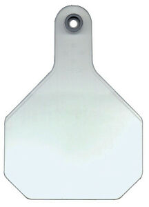 All American Livestock Tag Blank Large White 25 pk