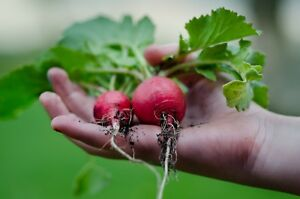 Fully Turnkey Gardening Dropshipping Website Stocked Business Ready To Go