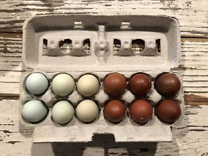 Assorted Rare Breed Hatching Eggs 12 Lavender Orpington Ayam Cemani Marans