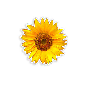 Sunflower Sticker Yellow Sun Flower Cup Laptop Car Vehicle Window Bumper Decal