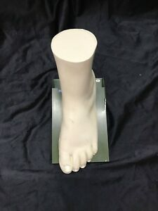 Vintage Foot And Ankle Skeleton Muscle Anatomical Model