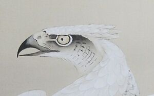 Japanese Painting White Hawk Hanging Scroll Old Antique Pine Picture Japan C937