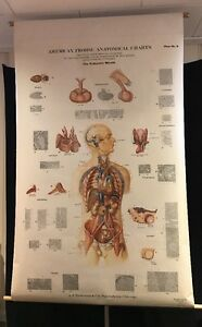Antique Giant Frohse Anatomical Endocrine System Chart 1939