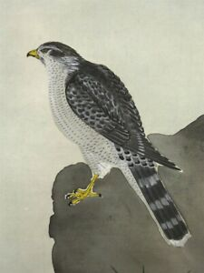 Hanging Scroll Japanese Painting Japan Hawk Cascade Antique Vintage Picture 638i