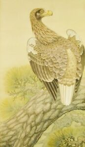 Japanese Eagle Hanging Scroll 80 5 Painting Hawk Pine Pic Picture Japan C345