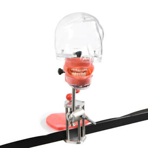 Dental Phantom Head Model With New Bench Mount Fo Teeth Model Exercise Simulator