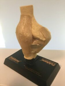 Vintage Medical Anatomical Knee Model For Feldene 3d Euc