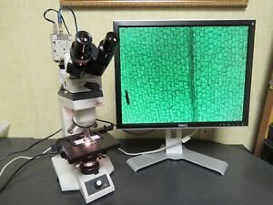 Leica Atc2000 Binocular Microscope W 4 Objectives 4x 10x 40x 100x Oil Color C
