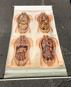 Antique A j Nystrom Co American Frohse Reproductive Anatomical Chart No 6