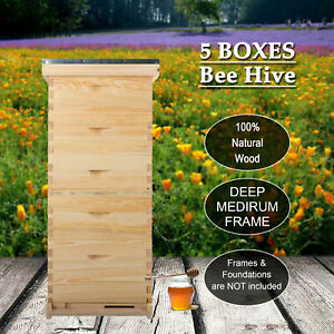 10 frame Size Hive Frame bee Hive Frame beehive Frames For Beekeeping 5 Boxes