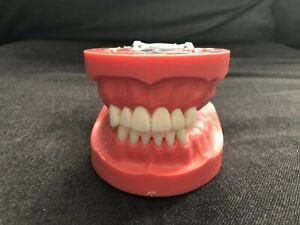 Vintage Nissin Kilgore Manikin Dental Teeth Dentistry Mold Model Typodont 2