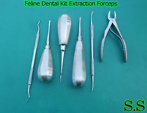 Feline Dental Kit Extraction Forceps Small Animal Dentistry Picks