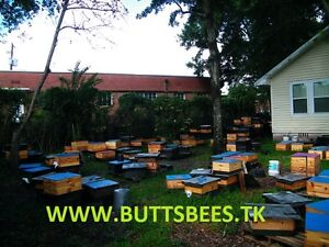 2018 Pre sale one Pound Package Of Bees With Mated Vshbh Queen ships 4 15 18