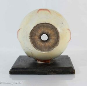 Antique German Anatomical Human Eye Paper Mache And Glass Lens Paper W Label