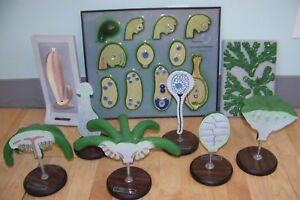 Lot Of 9 Vintage Bobbitt Anatomical Models Plants Botanical Angiosperm Lily Etc
