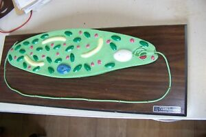Vintage Anatomical Model Bobbitt Planarian