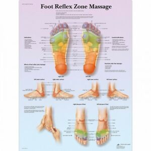 3b Scientific Human Anatomy Foot Reflex Zone Massage Chart Paper Version