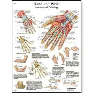 3b Scientific Hand And Wrist Anatomy pathology Chart Shipping Is Free
