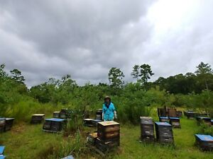 5 Frame Honey Bee Nucs Lot Of Ten Free Delivery Vsh Mated Queen 2019