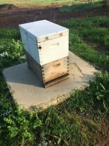 Bee Hives 2 Of Double Box 8 Frame Each Box