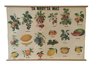 Vintage Botanical Pull Down Chart Fruits And Berries Chart School Chart Map