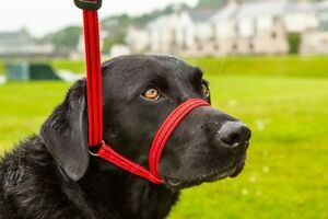 Gencon All in one Headcollar Lead Not Clip To Anti Stop Pull Soft Fits All Dog $26.12