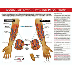 Blood Collection Sites Poster 17 w X 22 h 1 Ea